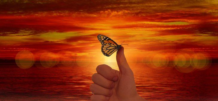 Dobre na hymn naszego Świata Motyli…:)